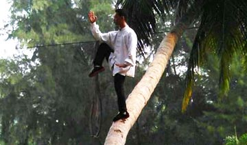 play tai chi on a tree